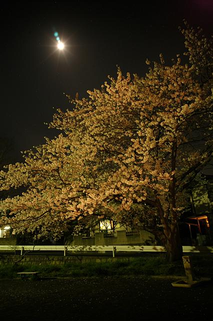 夜桜を綺麗に撮る方法