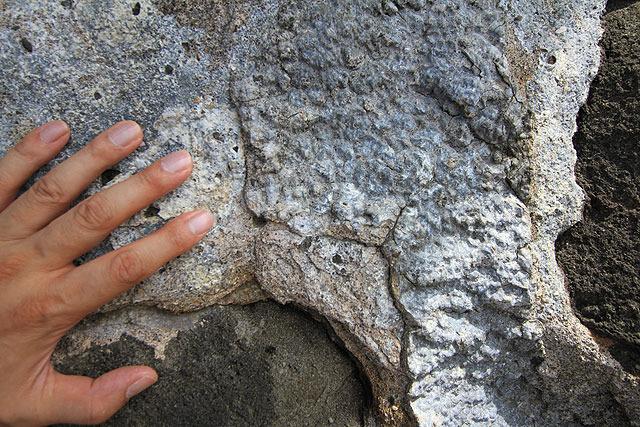 が、間近で見ると鉱物のようにも見える。