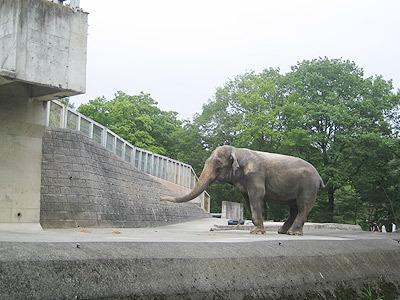 これはアジアゾウ
