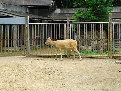 確かに牛っぽくて馬っぽくて、なんか鹿っぽい(ロバはあまり見たことがないのでピンと来なかった)