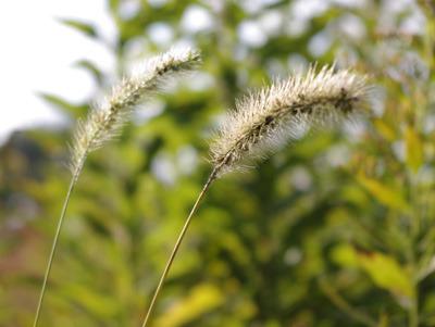 THE・そのへんに生えてる草。