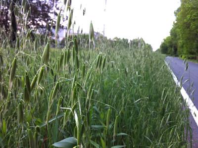 ここだって穀倉地帯。