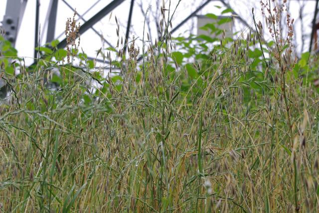 宝の山……。5000年前の人も、この草むらを同じ気持ちで眺めただろう。