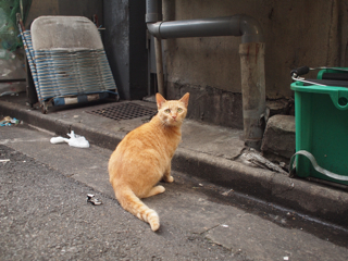 「地元民向けのごちゃごちゃした繁華街の路地を歩く」ということ自体がもう、私の故郷ではめっきり少なくなっていってるんだ。猫よ。