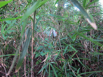 一人でものすごい茂みの中に入っていって捕った。常人には近づくことすら不可能でした。