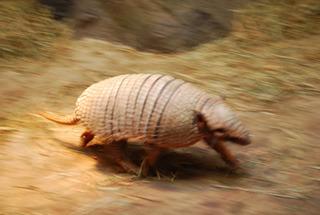 鈍くさいと思ってた動物が速かったみたいな意外性(イメージ)