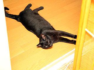 猫も伸びる夏の暑さよ。