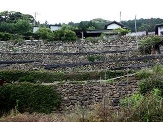 城塞みたいな石垣の段畑を横目に――