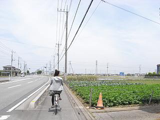 6月。初夏の陽気の中、自転車を20分ひたすらこぐ。