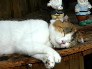 けしからん程に油断しすぎな猫を見つつ――