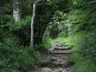そこからは、山道を登り五色台の上へ出て――