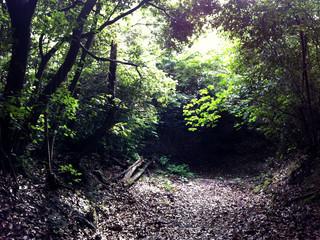 とりあえず、大窪寺から山道を東に進む