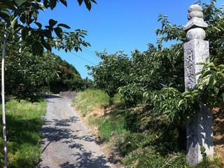 高野山の表参道である町石道を登り――
