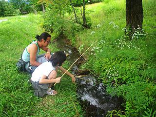 こんな小川にも潜んでいる。ウチダザリガニ、増え過ぎ。