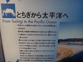 でもまあ、太平洋まではちょっと距離あるよね