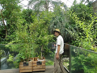 ジャングル方面からもアマゾン