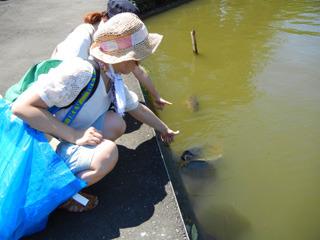 「鯉をヒッチハイクしようとした」はどう見ても無理があった