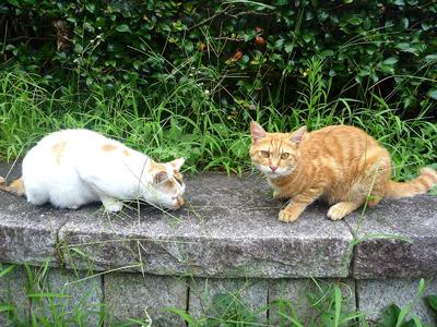 トラスケ(左)とミケヲ(右)。
