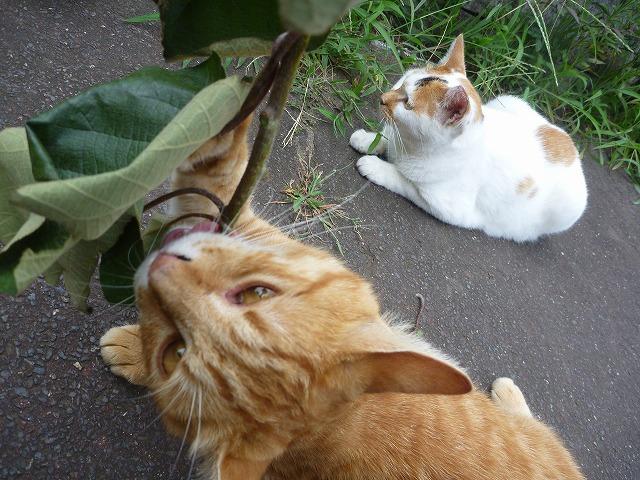 トラスケ「あああああ、枝あああああ!!」ミケヲ「見らんとこ…。」