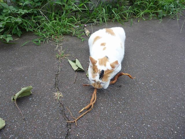 枝には無反応だったミケヲも寄ってきた。