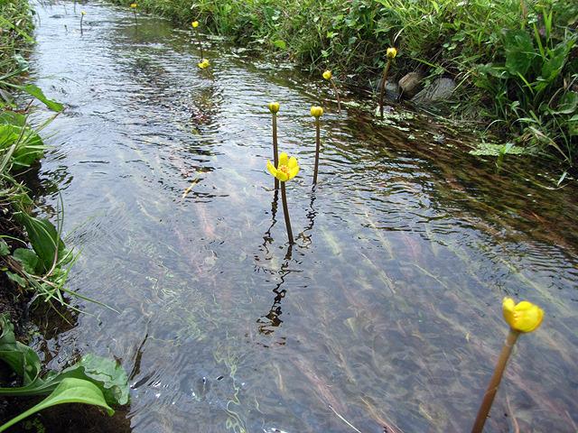 さらさらと流れる水がとてもきれいで理性を失いそうになった