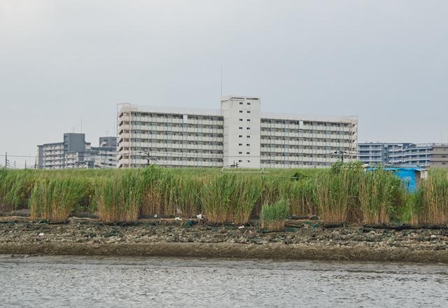ああっ!あれは平井七丁目アパートじゃないですか!