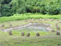 あの世ぽい池