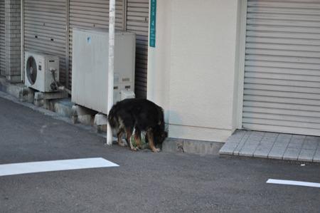 野良犬やー!!!安藤さん、野良犬やでぇぇぇぇ!!!!