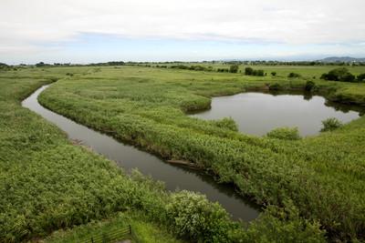 渡良瀬遊水地の湿地帯は、広大ですなぁ
