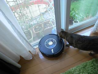 あとサッシにタイヤをとられてもがいていたりする(それを興味深そうに猫がつついていたりする)。かわいい。