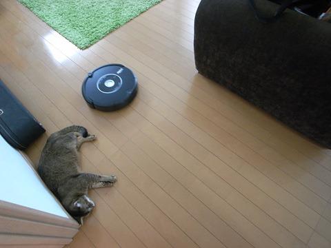 最初は作動する度逃げまどっていた猫も今では当たられても無視するまでになった。家族の一員として認めたんだと思う。