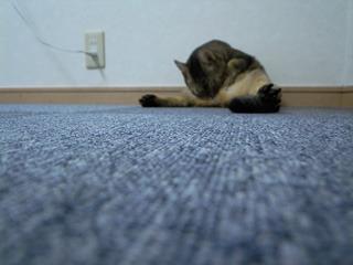 おかげで床はピカピカになりました。