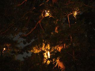 最後、燃えてた木に消防団が放水して火を消します。