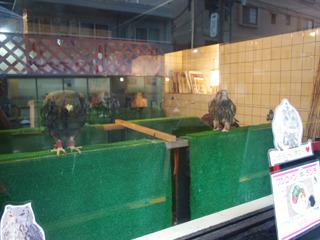 おお、窓越しにこちらをにらむ猛禽類。