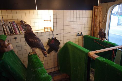 鷹・ハヤブサ部屋がありました。全部見えないけどこの日は3羽。