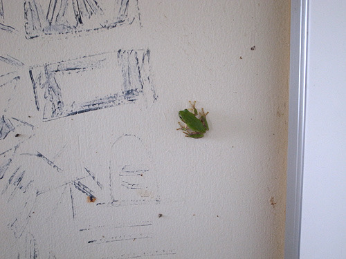 壁にカエルがたくさん貼り付いている