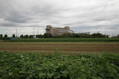 畑の向こうにそびえ建つ綾瀬市役所