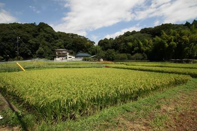 木々がこんもり茂った、右の山が早川城です