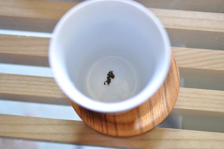と、言うことで、なんかカップに入ってる。