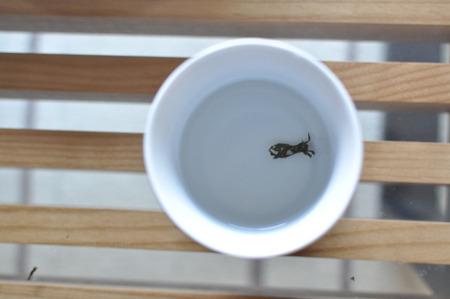 あれっ、湯飲みになんか入ってる。
