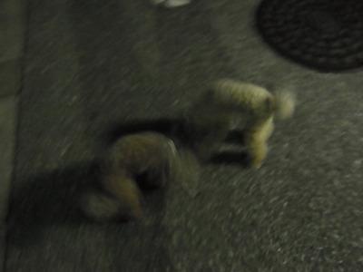 その現場近くで犬達が止まってしきりに地面のニオイを嗅ぐ。何もないのに・・怖いから!