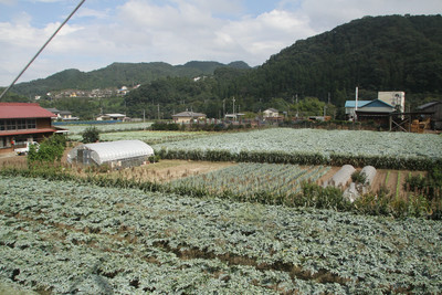 下仁田に近付くと、こんにゃく畑が多くなった