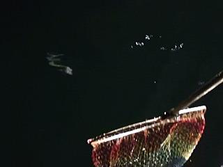 大物がすごい勢いで突っ込んできたので反射的に網を出してみた。