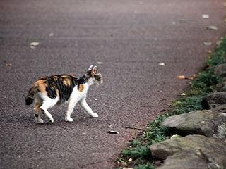 可愛い猫ちゃんがニャーン!