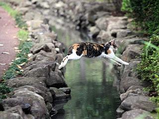 可愛い猫ちゃんがピョーン!!