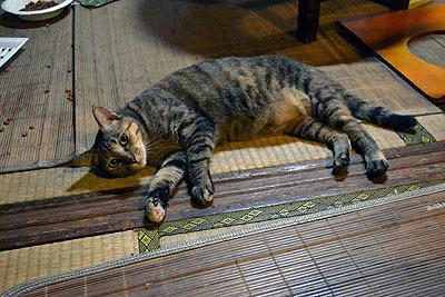 ちなみに僕はネコアレルギーなのですが、ネコがぜんぜん触らせてくれなかったおかげかこの日は大丈夫でした…。
