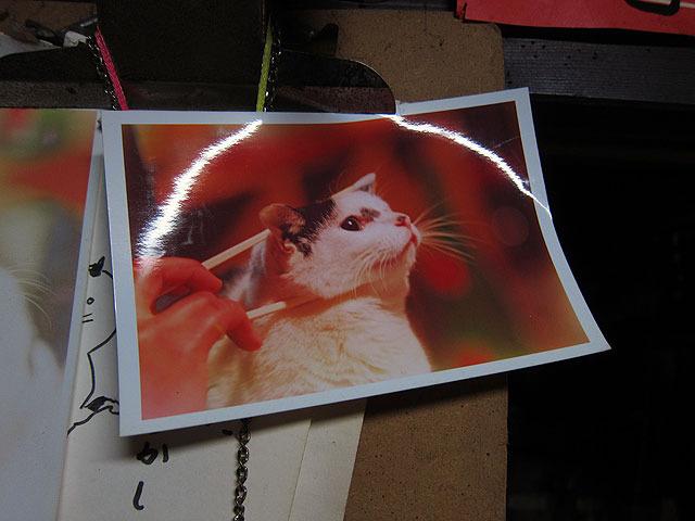 店内にあったネコの写真。これが蕎麦かどうかはきき忘れました…