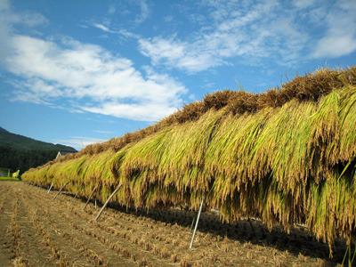 おいしいお米が食べられるのも農業技術が発達したおかげ(夜鷹さん提供)
