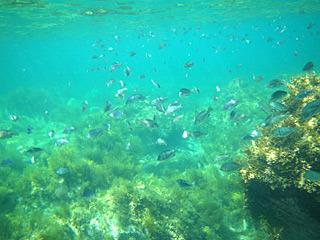 派手な魚はいないけれど、これぞ北の海(相撲取りではなくて)っていう感じで好感が持てる。