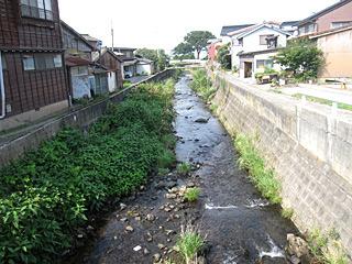 こういう小川に、アユがじゃんじゃん遡上しているんですよ。